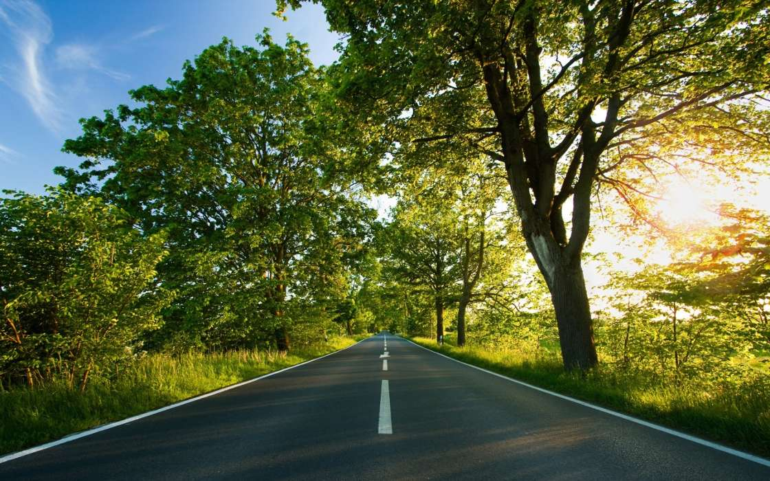 Landscape, Trees, Roads
